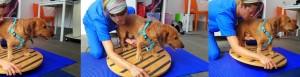 Fisioterapia del cane