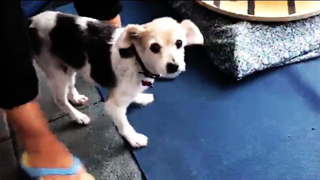 Morso di cane e frattura vertebrale: guarigione con riabilitazione e fisioterapia veterinaria
