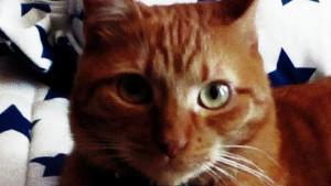 Fisioterapia del gatto a domicilio