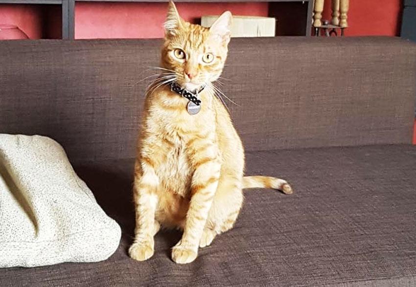 Fisioterapia gatto riabilitativa