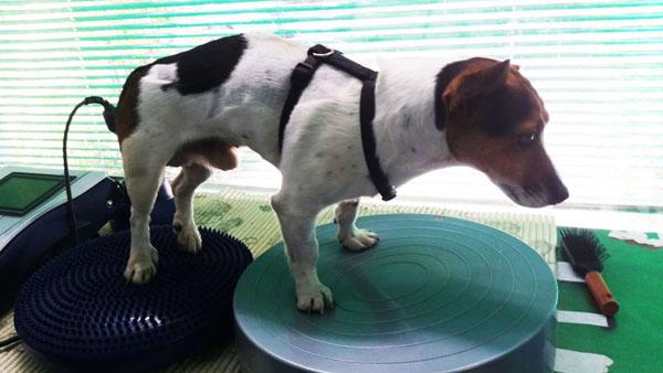 gestione-paziente-nurologico-veterinario