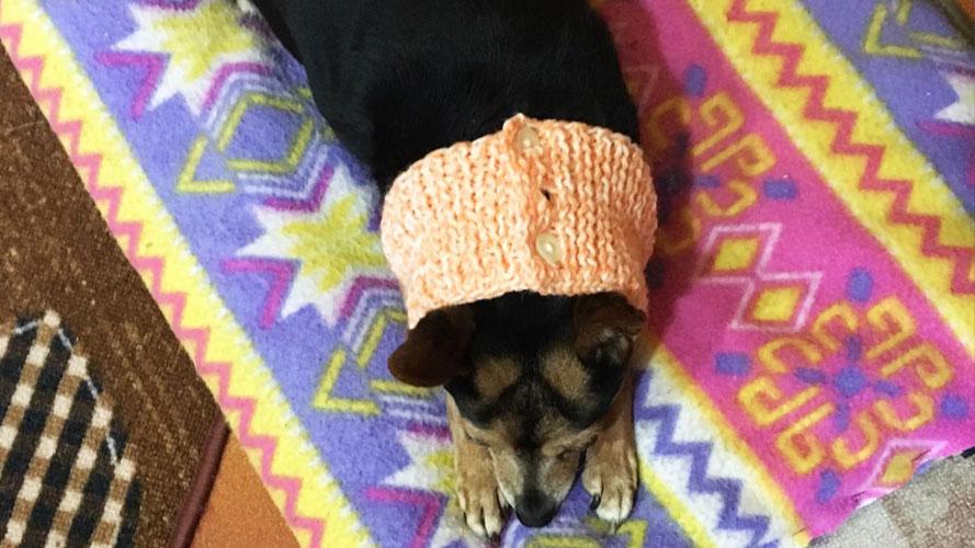 terapia decontratturante per contratture muscolari del cane
