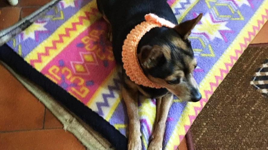 terapia deconteatturante delle contratture del cane