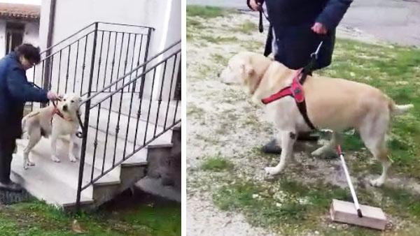 Riabilitazione del cane che cammina su tre zampe