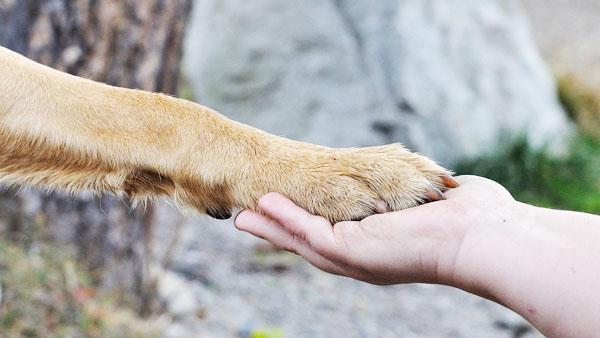 Cane con andatura tripode e guarigione