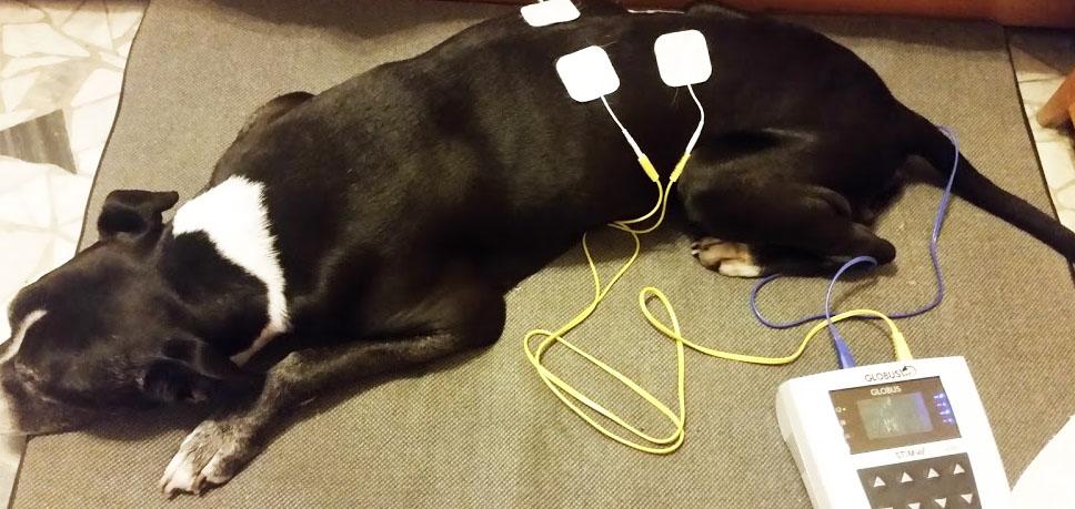 fisioterapia veterinaria cane