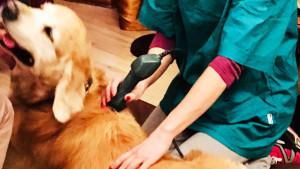 Fisioterapia veterinaria per il cane epilettico
