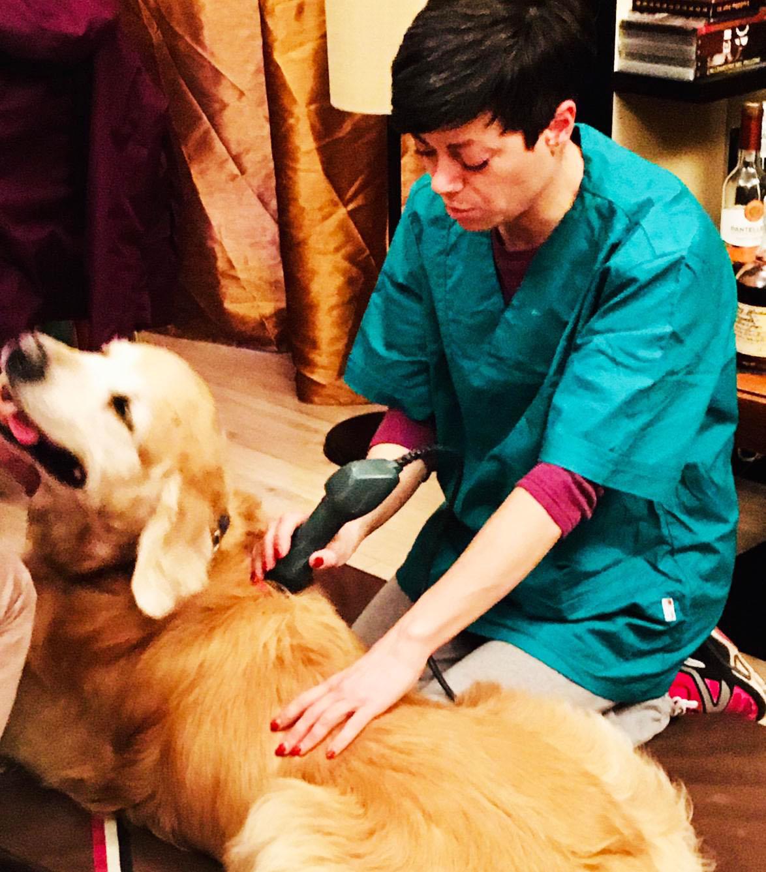 epilessia del cane e fisioterapia veterinaria