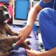 Terapia ultrasuoni per cani e gatti