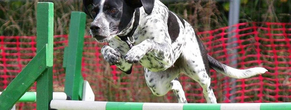 allenamento-del-cane-sportivo
