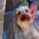 artrosi-nel-cane