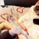 Emergenza Covid-19 fisioterapia veterinaria a Torino