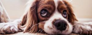 cane-paralizzato
