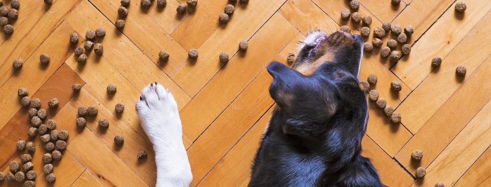 il cane disabile e la pappa