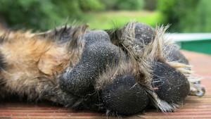 Artrosi del cane generalizzata