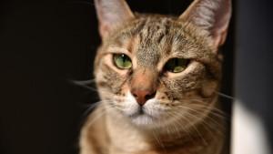 Fisioterapia del gatto Micia a casa