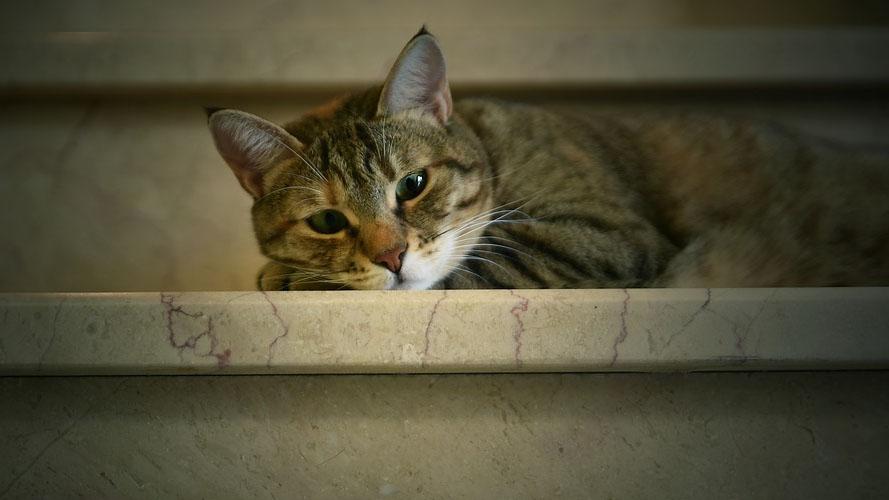 Micia è guarita con la fisioterapia del gatto a casa