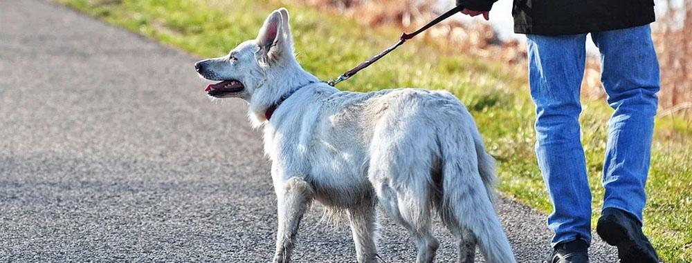 Passeggiata con il cane in zona rossa