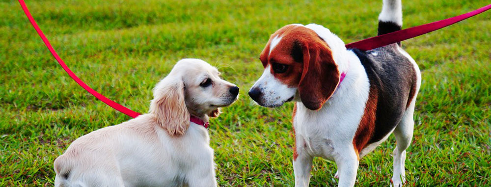 Passeggiata con il cane per la socializzazione