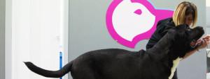 Nuovo centro di fisioterapia animale a Torino