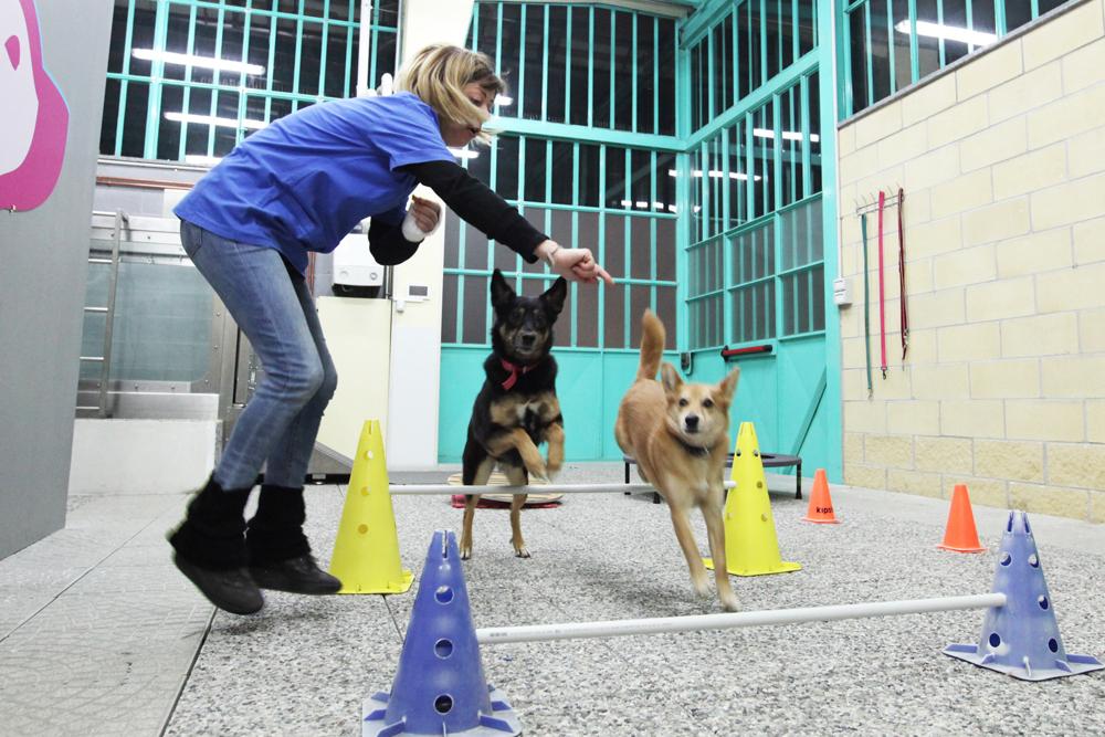palestra per cani torino