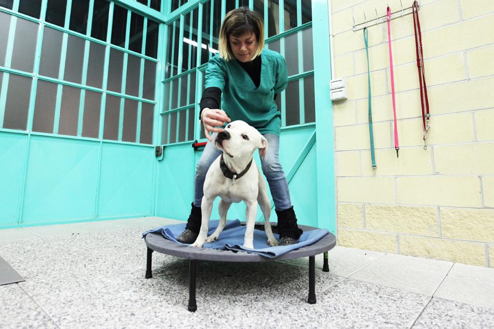 Riabilitazione veterinaria da SBA